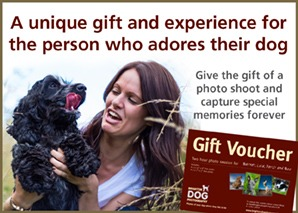 Brighton Dog Photography Gift Voucher