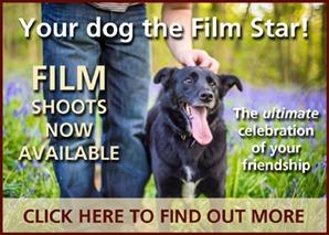 Brighton Dog Photography Film Shoots