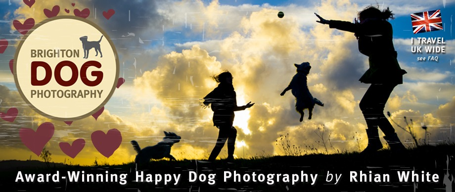 Brighton Dog Photography, Pet Photographer, Rhian White