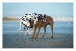 funny dog poster, funny dog print