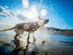 dog water shake poster